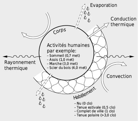 Echanges de chaleur entre le corps humain et son environnement. On remarquera ici que les échanges par conduction/convection se font en premier lieu avec l'environnement proche alors que les échanges par rayonnement se manifestent sur de plus grandes distances c.à.d. avec les surfaces qui délimitent la pièce.